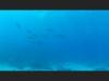 Kona Spinner Dolphins