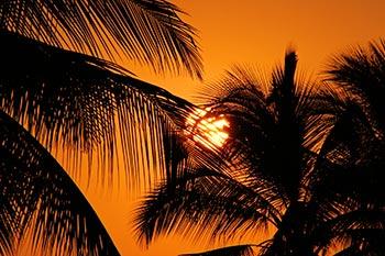 kona-sunset-palms