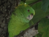 reef-house-polly-parrot-2