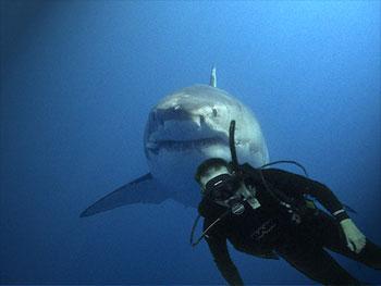 Joe with Shark