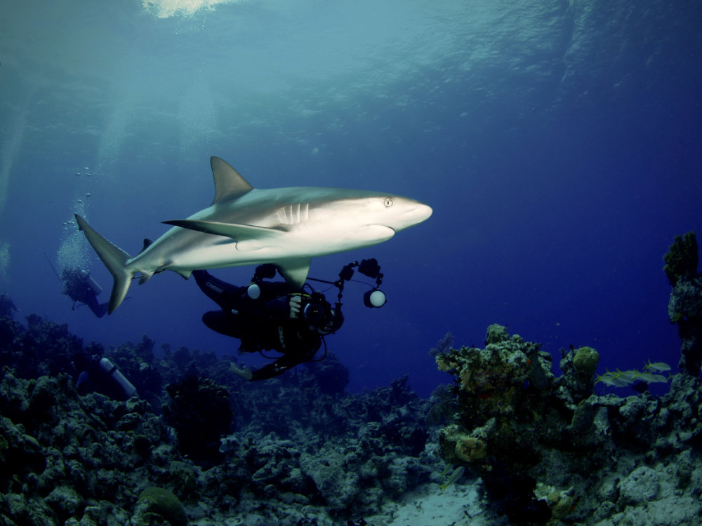 Shark Photography on San Salvador, Riding Rock Resort